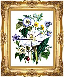Jane Loudon Flower Art Print canvas with Majestic Gold frame