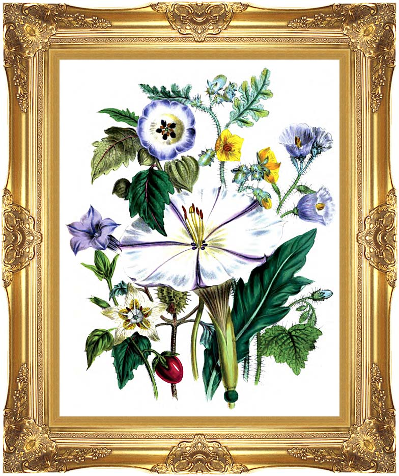 Jane Loudon Flower Art Print with Majestic Gold Frame