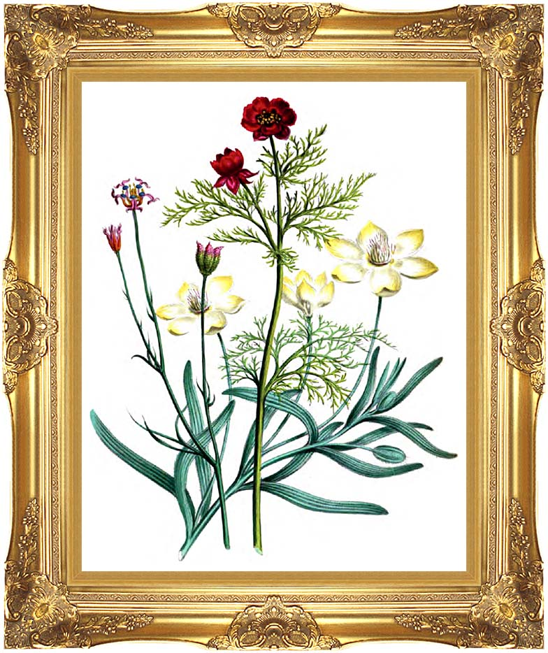 Jane Loudon Flowers with Majestic Gold Frame
