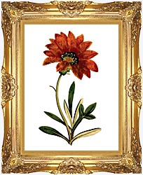 William Curtis Rigid Leaved Gorteria canvas with Majestic Gold frame