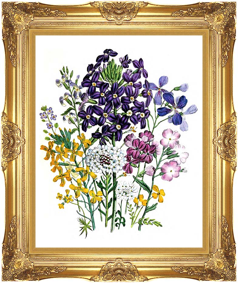 Jane Loudon Botanical Art with Majestic Gold Frame