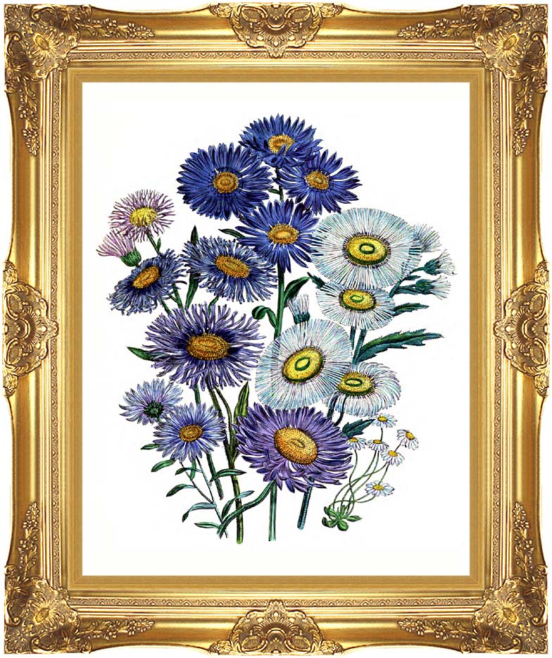 Jane Loudon Daisies And Asters with Majestic Gold Frame