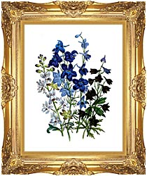 Jane Loudon Larkspurs canvas with Majestic Gold frame
