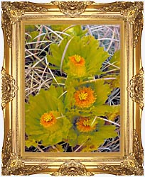 U S Fish And Wildlife Service Barrel Cactus canvas with Majestic Gold frame