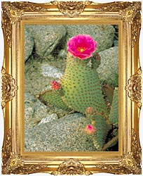 U S Fish And Wildlife Service Beavertail Cactus canvas with Majestic Gold frame