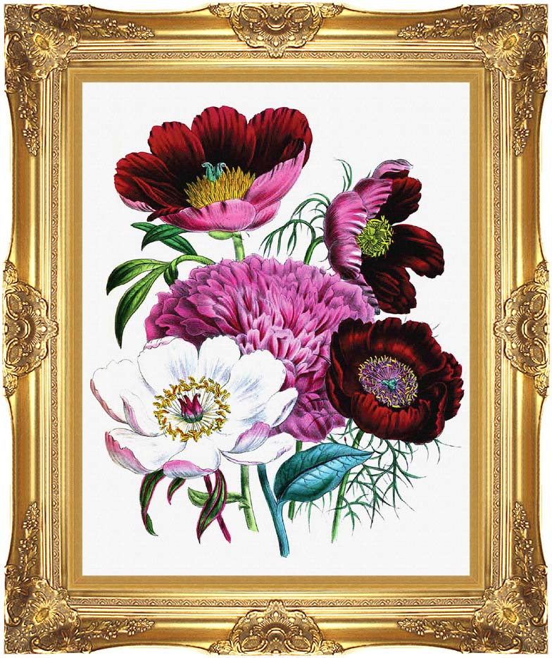 Jane Loudon Peonies with Majestic Gold Frame