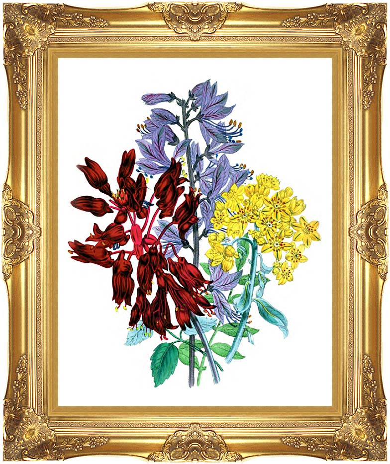 Jane Loudon Perennial Flowers with Majestic Gold Frame