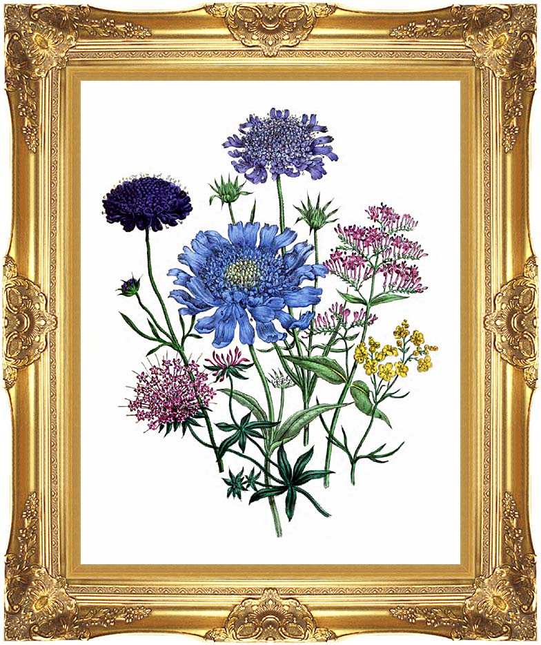 Jane Loudon Pincushion Flowers with Majestic Gold Frame