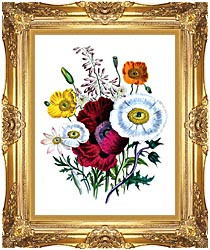 Jane Loudon Poppies Botanical canvas with Majestic Gold frame