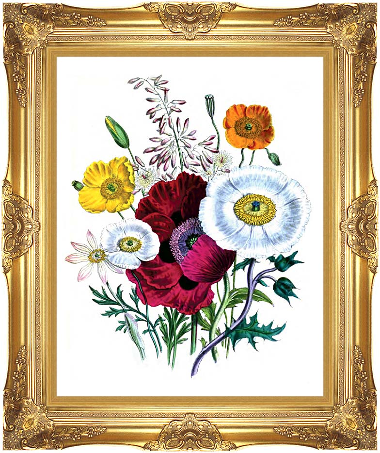 Jane Loudon Poppies Botanical with Majestic Gold Frame