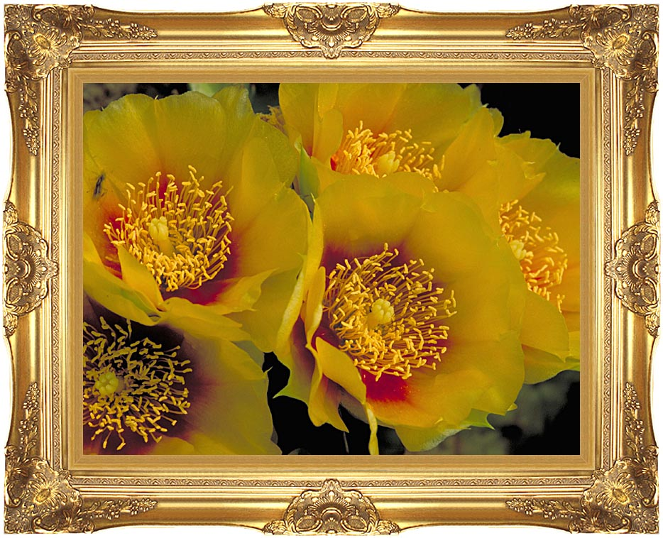U S Fish and Wildlife Service Eastern Prickly Pear Cactus Flowers with Majestic Gold Frame