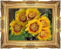 U S Fish And Wildlife Service Eastern Prickly Pear Cactus canvas with Majestic Gold frame