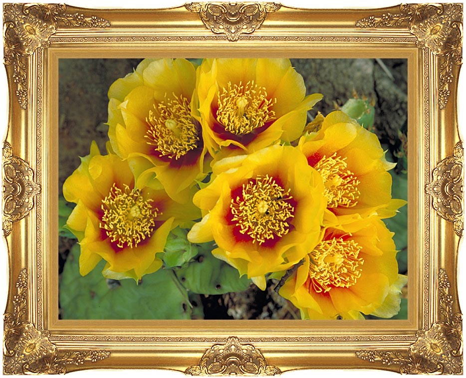 U S Fish and Wildlife Service Eastern Prickly Pear Cactus with Majestic Gold Frame