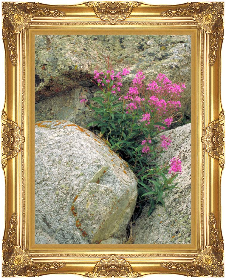 U S Fish and Wildlife Service Fireweed with Majestic Gold Frame