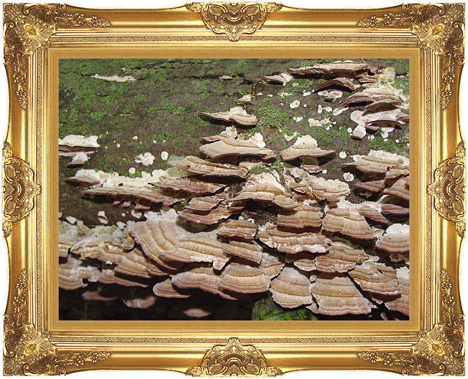 U S Fish and Wildlife Service Gray Shelf Mushrooms Growing on a Log with Majestic Gold Frame