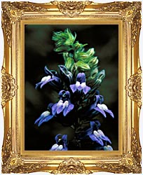 U S Fish And Wildlife Service Great Blue Lobelia canvas with Majestic Gold frame