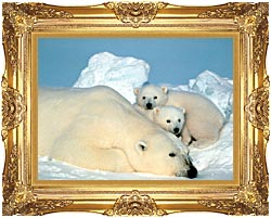 U S Fish And Wildlife Service Polar Bear With Cubs canvas with Majestic Gold frame