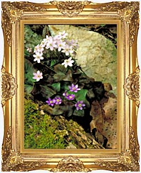 U S Fish And Wildlife Service Hepatica canvas with Majestic Gold frame