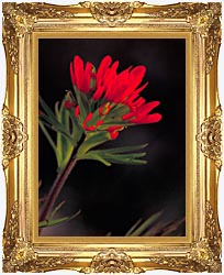 U S Fish And Wildlife Service Red Indian Paintbrush canvas with Majestic Gold frame