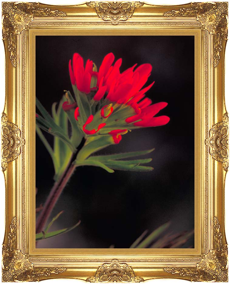 U S Fish and Wildlife Service Red Indian Paintbrush with Majestic Gold Frame