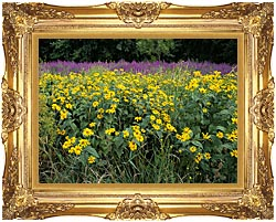 U S Fish And Wildlife Service Invasive Purple Loosestrife canvas with Majestic Gold frame
