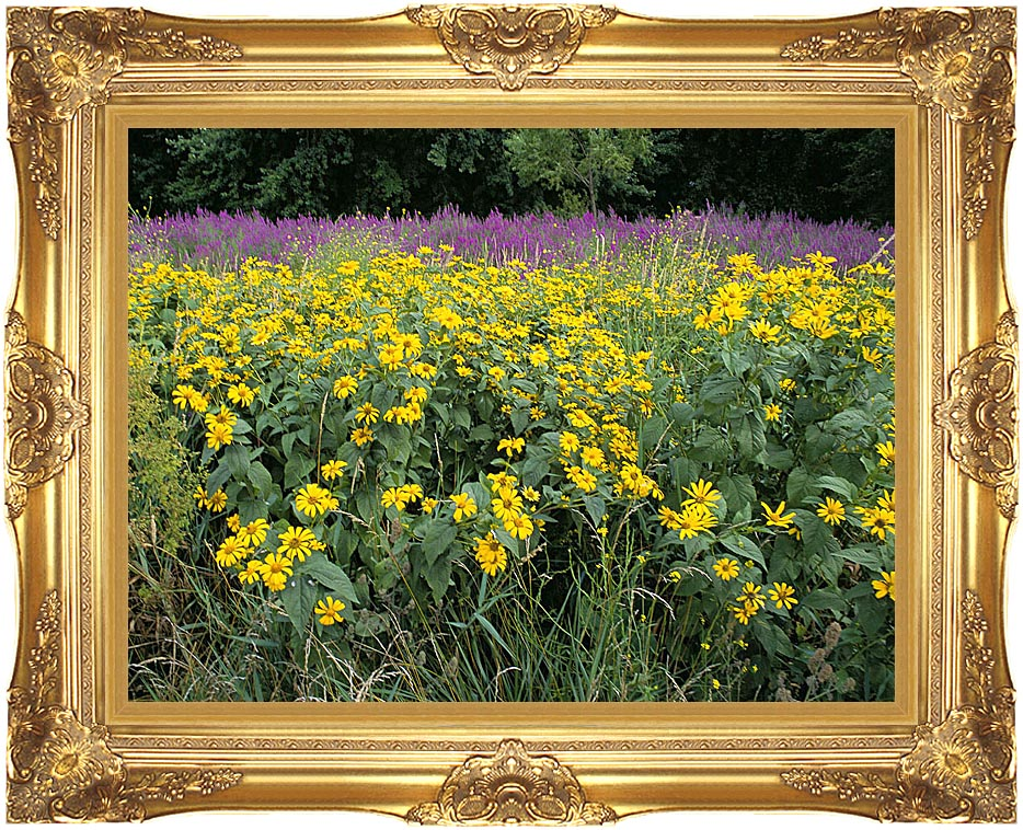 U S Fish and Wildlife Service Invasive Purple Loosestrife with Majestic Gold Frame