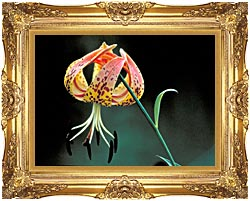 U S Fish And Wildlife Service Nodding Spotted Red Trillium canvas with Majestic Gold frame