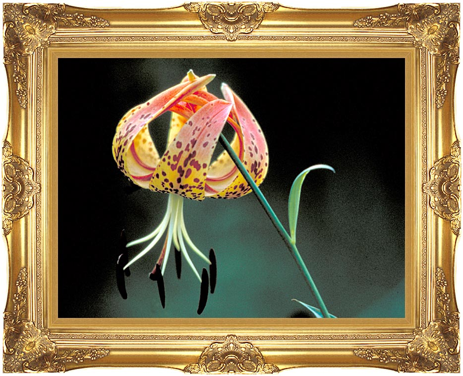 U S Fish and Wildlife Service Nodding Spotted Red Trillium with Majestic Gold Frame
