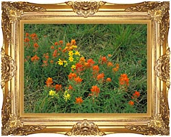 U S Fish And Wildlife Service Prairie Paintbrush canvas with Majestic Gold frame