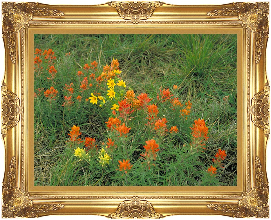 U S Fish and Wildlife Service Prairie Paintbrush with Majestic Gold Frame