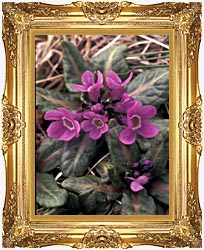 U S Fish And Wildlife Service Pribilof Wildflowers Primula canvas with Majestic Gold frame