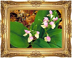 U S Fish And Wildlife Service Showy Orchis canvas with Majestic Gold frame