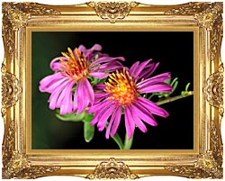 U S Fish And Wildlife Service Silky Aster canvas with Majestic Gold frame