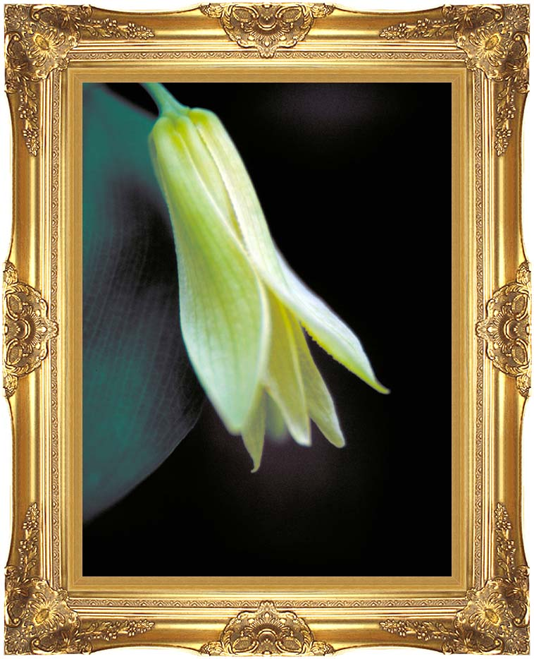 U S Fish and Wildlife Service Small Flowered Bellwort with Majestic Gold Frame