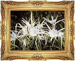 U S Fish And Wildlife Service Spider Lily canvas with Majestic Gold frame