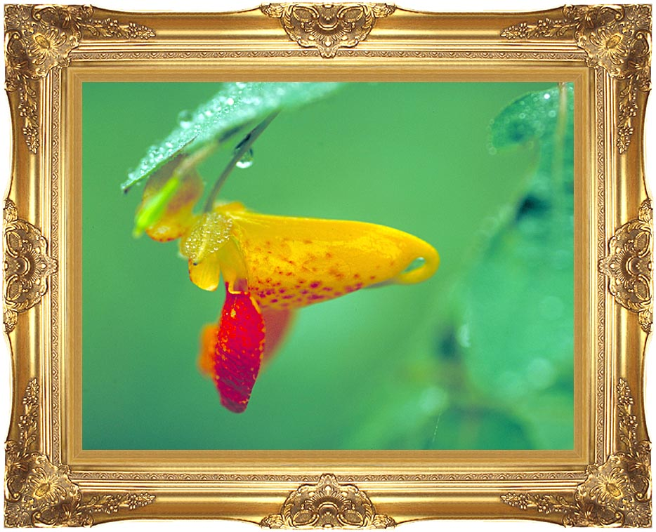 U S Fish and Wildlife Service Spotted Jewelweed with Majestic Gold Frame
