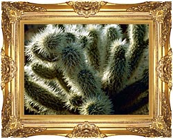 U S Fish And Wildlife Service Teddy Bear Cholla Cactus canvas with Majestic Gold frame