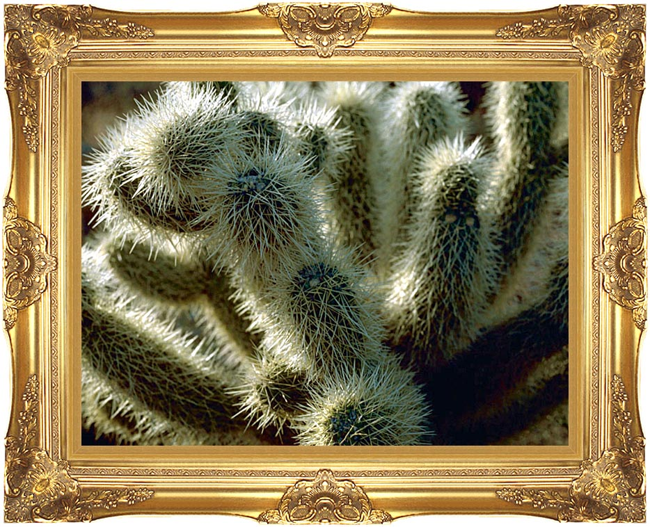 U S Fish and Wildlife Service Teddy Bear Cholla Cactus with Majestic Gold Frame