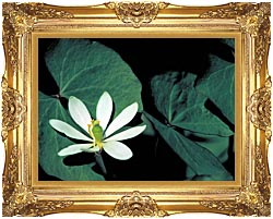 U S Fish And Wildlife Service Twinleaf canvas with Majestic Gold frame