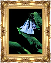 U S Fish And Wildlife Service Virginia Bluebells canvas with Majestic Gold frame