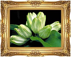 U S Fish And Wildlife Service White Gentian canvas with Majestic Gold frame