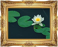 U S Fish And Wildlife Service White Water Lily canvas with Majestic Gold frame