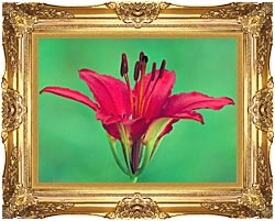 U S Fish And Wildlife Service Wood Lily canvas with Majestic Gold frame