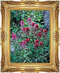 U S Fish And Wildlife Service Wyoming Paintbrush canvas with Majestic Gold frame