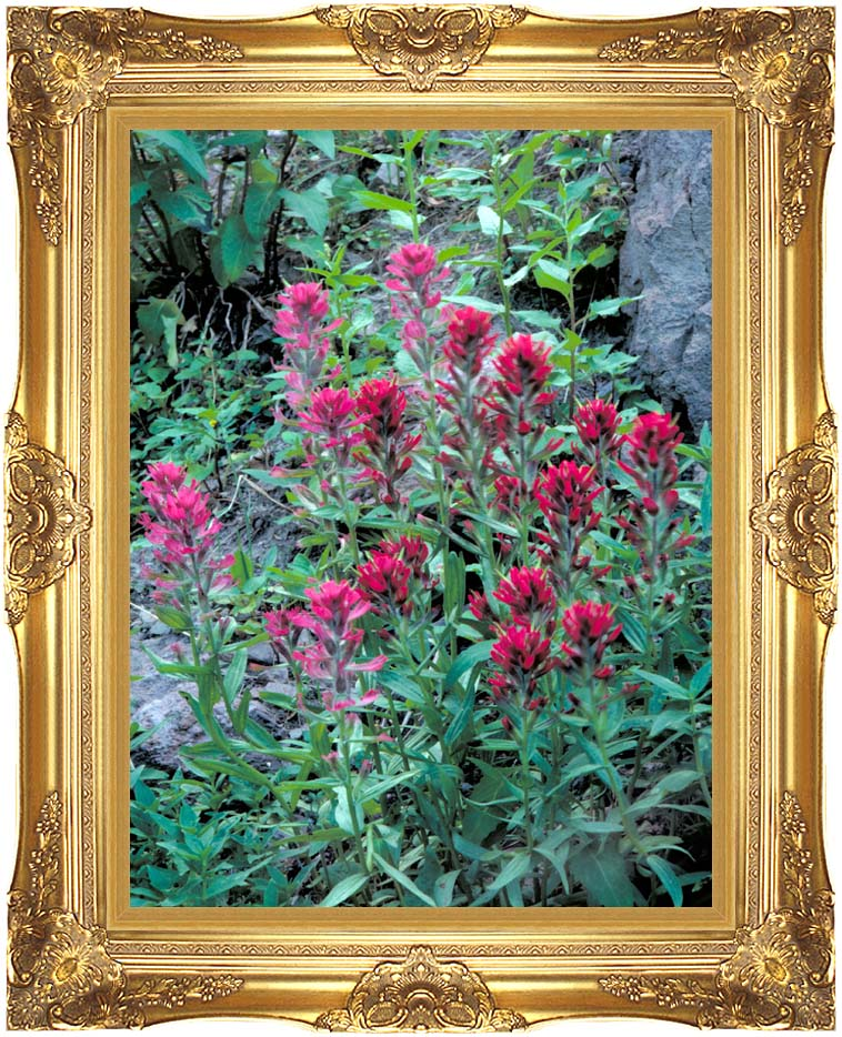 U S Fish and Wildlife Service Wyoming Paintbrush with Majestic Gold Frame