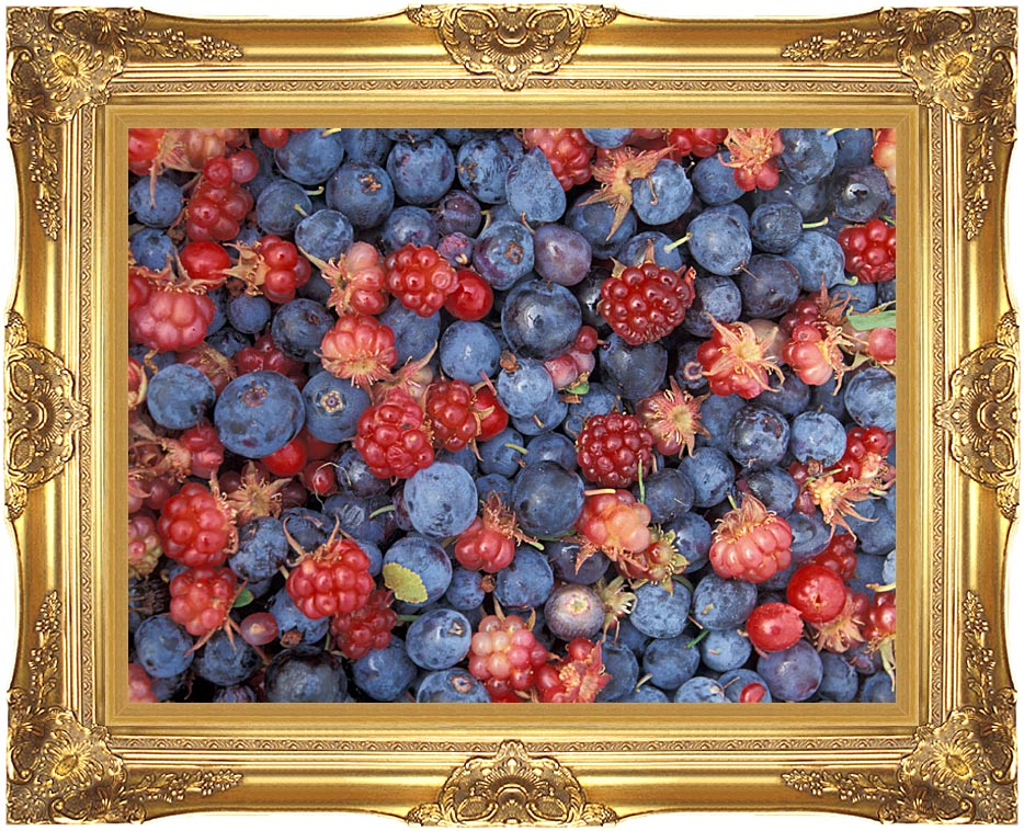 U S Fish and Wildlife Service Wild Berries with Majestic Gold Frame