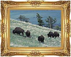 U S Fish And Wildlife Service Rocky Mountain Bison canvas with Majestic Gold frame