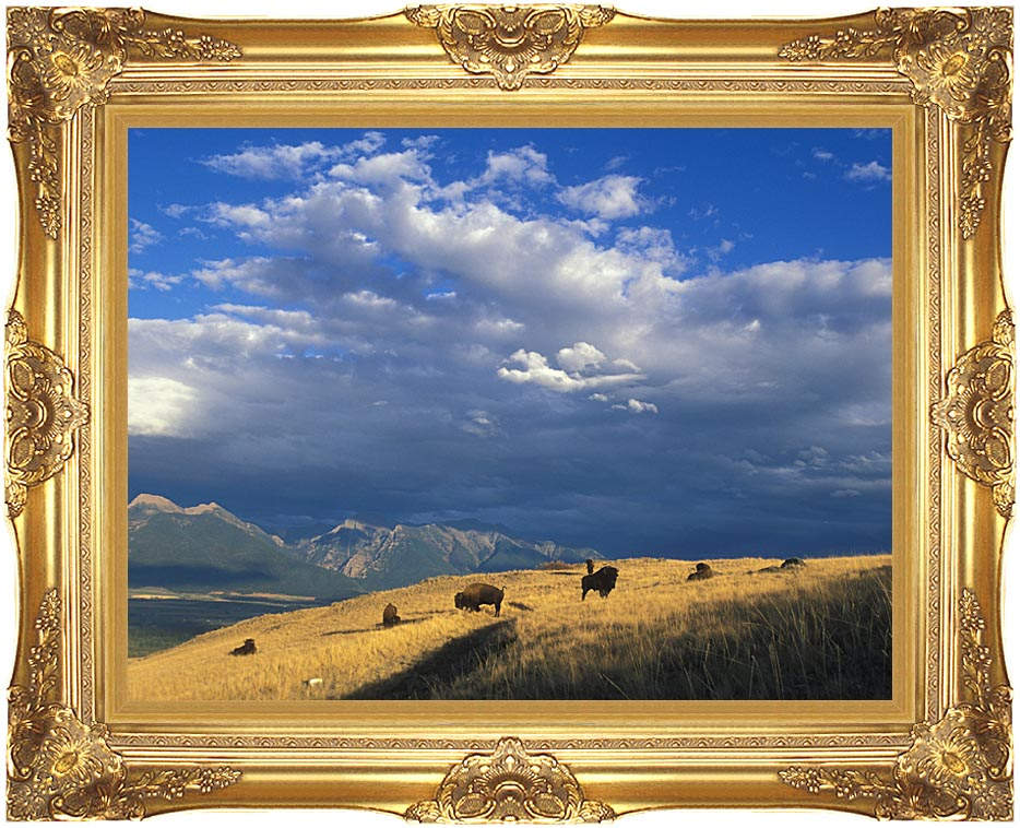 U S Fish and Wildlife Service Buffalo on the Range with Majestic Gold Frame