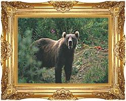 U S Fish And Wildlife Service Kodiak Bear canvas with Majestic Gold frame