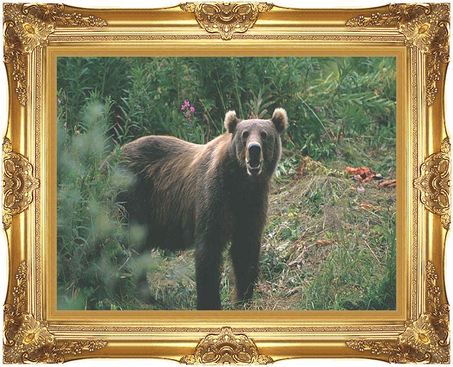 U S Fish and Wildlife Service Kodiak Bear with Majestic Gold Frame